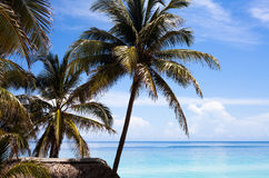Cuba beach with palms and blue sky. In cuba Royalty Free Stock Photo