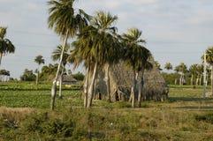 Cuba, campos fotografia de stock royalty free