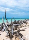 Cuba, Cayo Jutias Stukken van hout, door het overzees worden de geverft, leggen over wit zandig strand dat Stock Fotografie