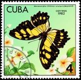 CUBA - CERCA DE 1982: O selo postal impresso por Cuba mostra insularis dos stelenes de Metamorpha da borboleta Imagem de Stock Royalty Free