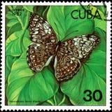 CUBA - CERCA DE 1982: O selo postal impresso por Cuba mostra o diasia do ferox de Hamadryas da borboleta Fotografia de Stock