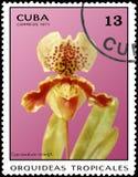 CUBA - CIRCA 1971: Il francobollo stampato in Cuba mostra il mowgh del Cypripedium dell'orchidea, orchidee di serie Immagini Stock Libere da Diritti