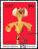 CUBA - CIRCA 1971: Il francobollo stampato in Cuba mostra il solum del Cypripedium dell'orchidea, orchidee di serie Immagine Stock