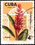 CUBA - CIRCA 1974: Il francobollo stampato in Cuba mostra l'alpinia purpurata del fiore, fiori di serie Immagini Stock Libere da Diritti