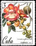 CUBA - CIRCA 1967: il francobollo, stampato in Cuba, mostra l'immagine del guianensis di Couroupita Fotografie Stock