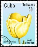 CUBA - CIRCA 1982: il francobollo stampato in Cuba mostra un gioiello del tulipano della primavera royalty illustrazione gratis
