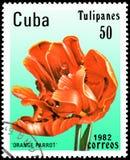 CUBA - CIRCA 1982: il francobollo stampato in Cuba mostra un pappagallo dell'arancia del tulipano Fotografie Stock Libere da Diritti