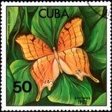 CUBA - CIRCA 1982: Il francobollo stampato da Cuba mostra il eleuchea di Marpesia della farfalla illustrazione di stock