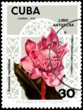 CUBA - CIRCA 1974: Postage stamp printed in Cuba shows Amomum capitatum, series flowers. CUBA - CIRCA 1974: Postage stamp printed in Cuba shows Amomum capitatum Stock Photos