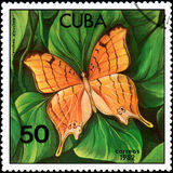 CUBA - CIRCA 1982: Postage stamp printed by Cuba shows butterfly Marpesia eleuchea Stock Photos