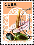 CUBA - CIRCA 1974: Postage stamp printed in Cuba shows the flower Anthurium andraeanum, series flowers Royalty Free Stock Photo