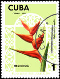 CUBA - CIRCA 1974: Postage stamp printed in Cuba shows the flower Heliconia humilis Royalty Free Stock Photo