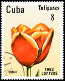 CUBA - CIRCA 1982: postage stamp printed in Cuba shows a tulip `Ringo` Stock Photography