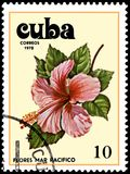 CUBA - CIRCA 1978: A stamp, printed in Cuba, shows a Hibiscus flower Royalty Free Stock Photography