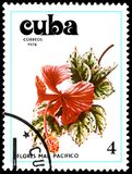 CUBA - CIRCA 1978: A stamp, printed in Cuba, shows a Hibiscus flower Royalty Free Stock Image