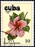 CUBA - CIRCA 1978: Un bollo, stampato in Cuba, mostra un fiore dell'ibisco illustrazione vettoriale