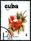 CUBA - CIRCA 1978: Un bollo, stampato in Cuba, mostra un fiore dell'ibisco Immagine Stock Libera da Diritti