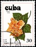 CUBA - CIRCA 1978: Un bollo, stampato in Cuba, mostra un fiore dell'ibisco Immagini Stock
