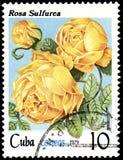 CUBA - CIRCA 1979: Un bollo, stampato in Cuba, mostra un sulfurea di Rosa, rose di serie illustrazione vettoriale