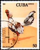 CUBA - CIRCA 1981: Un sello impreso por Cuba muestra el gallo Jabao Fotografía de archivo libre de regalías