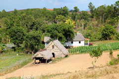 Cuba countryside Royalty Free Stock Images