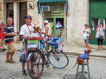 Cubans make money. Cuba, Havana, December 5, 2015, the historic center of the city, the Cuban shows tourists a theatrical performance with dogs, for making money Royalty Free Stock Photography
