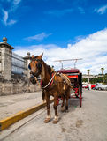 Cuba Havana horse drawn carriage Royalty Free Stock Photos