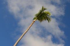 cuba karaibski kokosowy drzewko palmowe Fotografia Royalty Free
