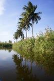 cuba karaibski kokosowy drzewko palmowe Zdjęcia Royalty Free