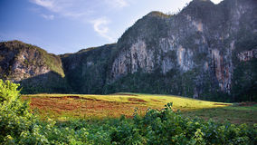 Cuba lanscape. The valley of Vinales in Cuba. This is an UNESCO World Heritage site Stock Images