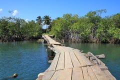 Cuba nature Stock Photos