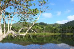 Cuba nature Stock Image