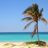 Cuba palm tree Royalty Free Stock Images