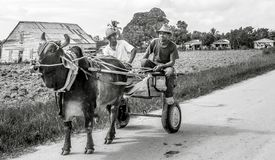 Cuba, Pinar del Rio area, tobacco farmers, ox cart, with two farmers royalty free stock image