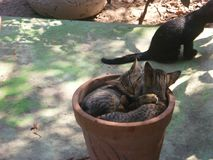 Cats in the Spring. Cuban Resort royalty free stock photos