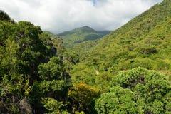 Cuba, Tourist trail into Pico Turquino tops. royalty free stock photography