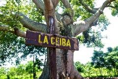 Cuba tree. La Ceiba in Cuba.  Nature in village Royalty Free Stock Image