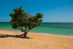 Cuba. Trinidad. Ancona Beach. Caribbean sea.The tree grows on the beach. Cuba. Trinidad. Ancona Beach. Caribbean sea.The tree grows on the beach Stock Photography