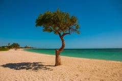 cuba trinidad Ancona encalha Ajardine com árvore e guarda-chuvas pelo mar das caraíbas Fotografia de Stock Royalty Free