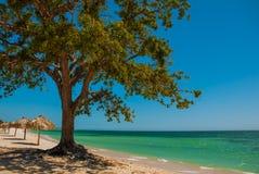 cuba trinidad Ancona encalha Ajardine com árvore e guarda-chuvas pelo mar das caraíbas Imagens de Stock Royalty Free