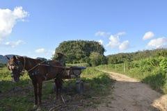 CUBA Valle de Viñales em Piñar del Rio Imagem de Stock
