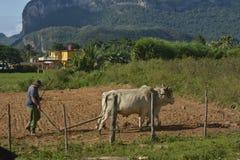 CUBA Valle de Viñales em Piñar del Rio Fotos de Stock Royalty Free