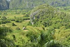 CUBA Valle de Viñales nel del Rio di Piñar Fotografia Stock Libera da Diritti