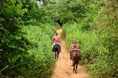 Cuba, Valley de Vinales Fotografia Stock