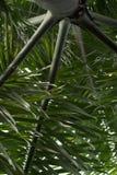 Cubaanse koninklijke palm royalty-vrije stock foto's
