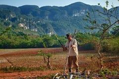 Cubaanse landbouwer stock foto