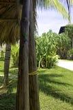 Cubaanse mannelijke die hagedis Allison ` s Anole, ook als blauw-geleid wordt bekend anole - Varadero, Cuba Royalty-vrije Stock Foto's