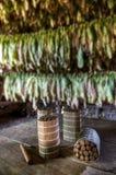 Cubaanse sigaren in het drogen van huis Royalty-vrije Stock Afbeeldingen