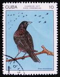 Cuban blackbird Dives atroviolaceus, stamp is from the series, circa 1977. MOSCOW, RUSSIA - APRIL 2, 2017: A post stamp printed in Cuba shows the Cuban blackbird Royalty Free Stock Image