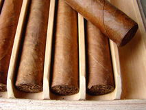 Cuban brown cigars Royalty Free Stock Photo